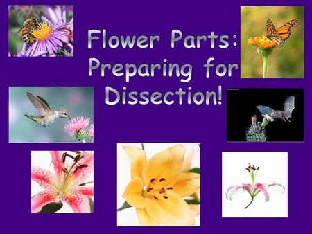 You are going to get to dissect your own flowers! Yay! Why do we dissect flowers?  It helps us understand how pollination works!  By identifying each.
