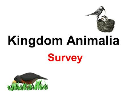Kingdom Animalia Survey.
