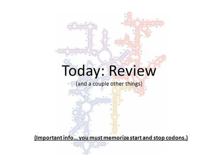 Today: Review (and a couple other things) (Important info… you must memorize start and stop codons.)
