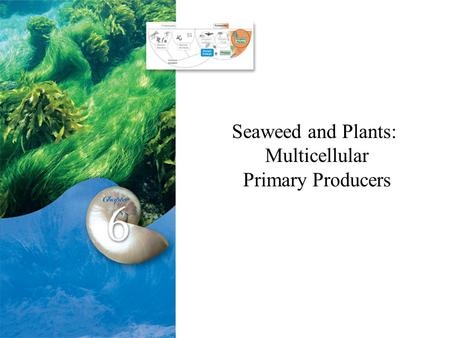 Seaweed and Plants: Multicellular Primary Producers.