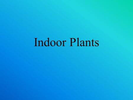 Indoor Plants.