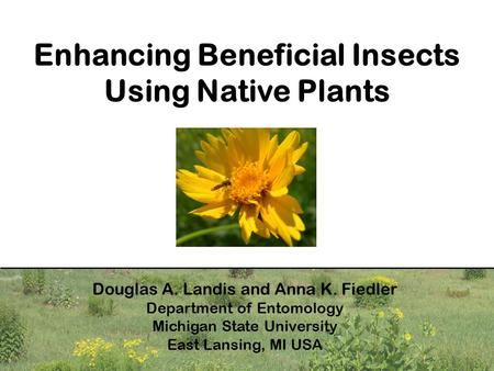 Enhancing Beneficial Insects