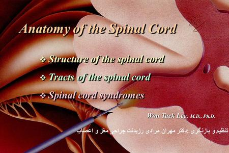 Anatomy of the Spinal Cord  Structure of the spinal cord  Tracts of the spinal cord  Spinal cord syndromes Anatomy of the Spinal Cord  Structure of.