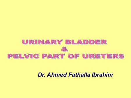 Dr. Ahmed Fathalla Ibrahim. Upper Surface Inferolateral surface Apex Neck.