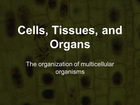 Cells, Tissues, and Organs The organization of multicellular organisms.