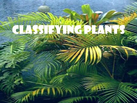 Classifying Plants. Standards: Students will be able to demonstrate how plants are sorted into groups. Essential Questions: How is the classification.