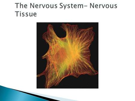 The Nervous system has three major functions :  Sensory – monitors internal & external environment through presence of receptors  Integration – interpretation.