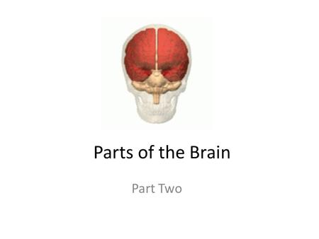Parts of the Brain Part Two.