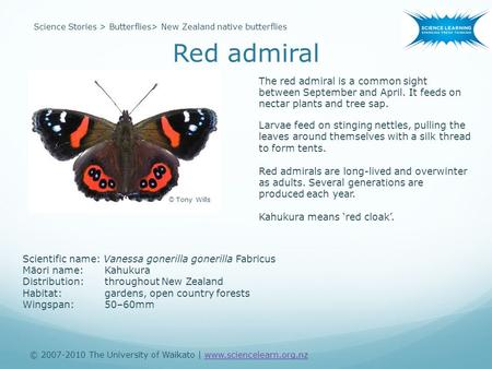 Red admiral © 2007-2010 The University of Waikato | www.sciencelearn.org.nzwww.sciencelearn.org.nz Science Stories > Butterflies> New Zealand native butterflies.