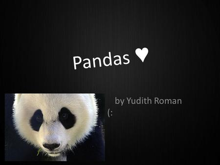 Pandas ♥ by Yudith Roman (:. Where do pandas live? Pandas live in temperate-zone bamboo forest in Central China.