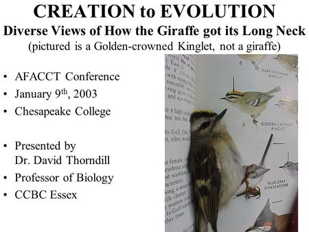 CREATION to EVOLUTION Diverse Views of How the Giraffe got its Long Neck (pictured is a Golden-crowned Kinglet, not a giraffe) AFACCT Conference January.