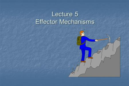 Lecture 5 Effector Mechanisms. Host Defense DefenseMechanisms Innate Inborn independent of previous experience Acquired Naturallyacquired Active Adoptive.