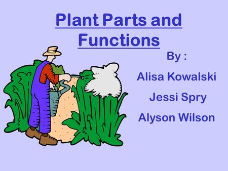 Plant Parts and Functions By : Alisa Kowalski Jessi Spry Alyson Wilson.
