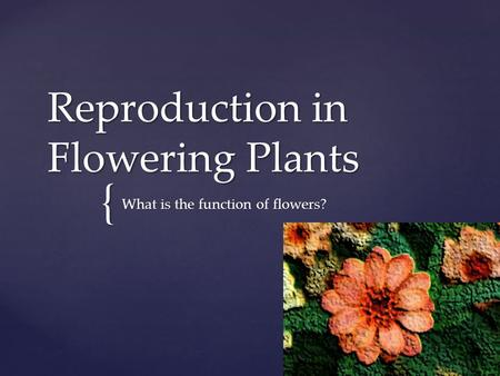 { Reproduction in Flowering Plants What is the function of flowers?