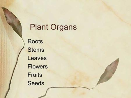 Plant Organs Roots Stems Leaves Flowers Fruits Seeds.