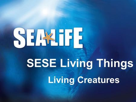 Living Creatures SESE Living Things. Living creatures All living creatures have to do the following things: Feed Reproduce Grow Move Sense.