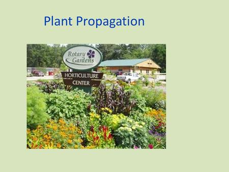 Plant Propagation The process of increasing the numbers of a species, maintaining a species, or preserving the vigor of a plant.
