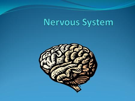 What is the function of the nervous system? Sensory Input: action of getting information from the surrounding environment. Things are being sent to the.