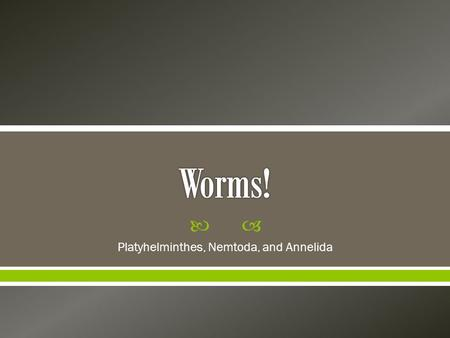  Platyhelminthes, Nemtoda, and Annelida.  There are three major groups of worms: o 1) Flatworms (Phylum Platyhelminthes) o 2) Roundworms (Phylum Nematoda)