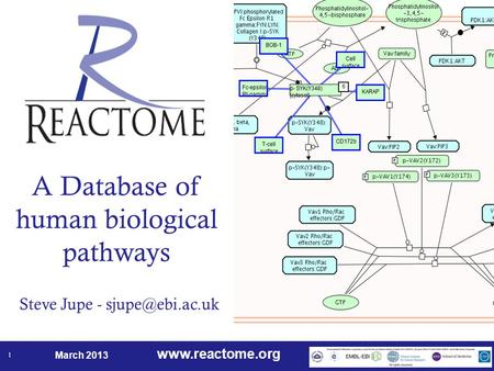March 2013 1 A Database of human biological pathways Steve Jupe -