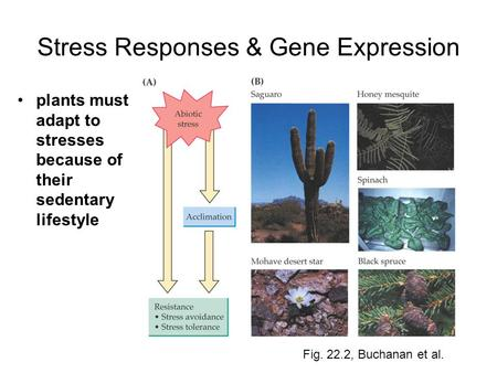 Stress Responses & Gene Expression