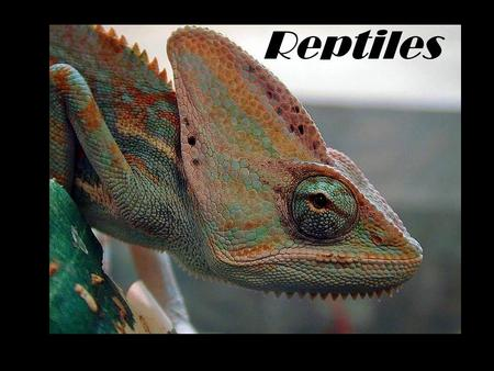 Reptiles. 310 million years ago… reptiles were the first vertebrates to make the complete transition to life on land limited competition for the insects.