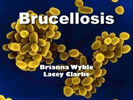 Brucellosis Brianna Wyble Lacey Clarke. Brucellosis An infectious disease that spreads from animals to people usually through unpasteurized milk, cheese,