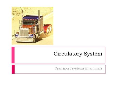 Circulatory System Transport systems in animals. Overview 1. Functions of a transport/circulatory system Functions of a transport/circulatory system 2.