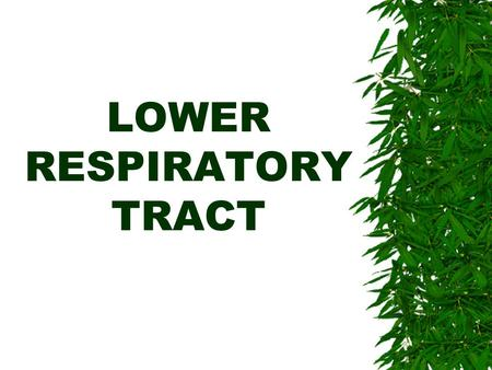LOWER RESPIRATORY TRACT. LOWER RES. TRACT  Is the tract that is responsible for gas exchange.