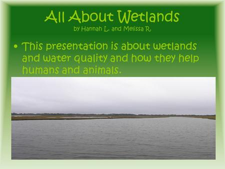 All About Wetlands by Hannah L. and Melissa R. This presentation is about wetlands and water quality and how they help humans and animals.