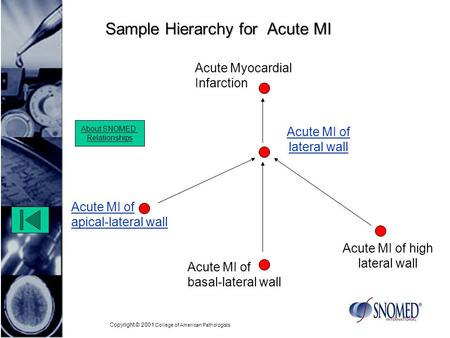 Copyright © 2001 College of American Pathologists Sample Hierarchy for Acute MI Acute MI of lateral wall Acute MI of apical-lateral wall Acute Myocardial.