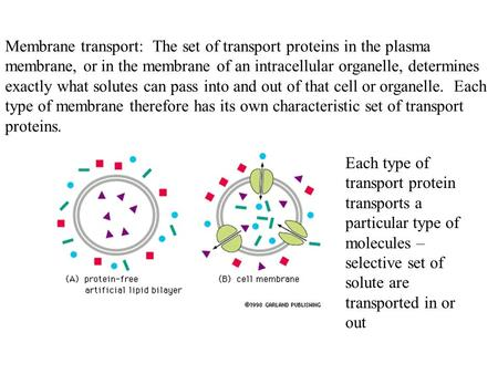 Membrane transport: The set of transport proteins in the plasma membrane, or in the membrane of an intracellular organelle, determines exactly what solutes.