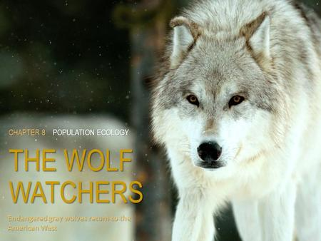 CHAPTER 8POPULATION ECOLOGY THE WOLF WATCHERS CHAPTER 8 POPULATION ECOLOGY THE WOLF WATCHERS Endangered gray wolves return to the American West.