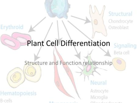Plant Cell Differentiation Structure and Function relationship.