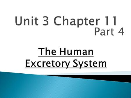 Part 4 The Human Excretory System.  The Excretory systems maintain homeostasis with respect to water, salt and metabolite concentrations within the blood.
