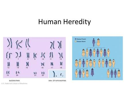 Human Heredity.