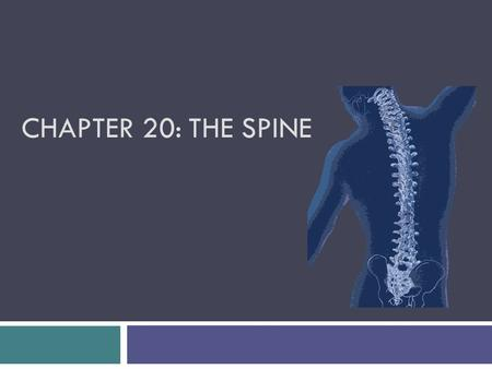 Chapter 20: The Spine.