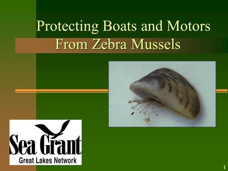 Protecting Boats and Motors From Zebra Mussels