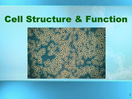 1 Cell Structure & Function 2 Basic Structure of a Cell.