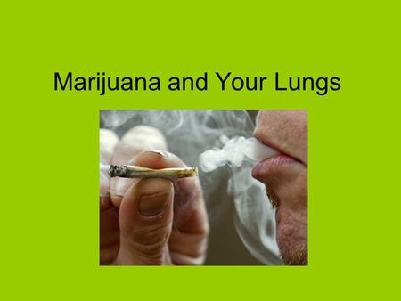 Marijuana and Your Lungs. What is Marijuana? Marijuana is the most widely used illegal drug in North America. It is a mixture of dry, shredded flowers,