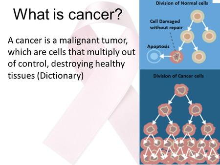 What is cancer? A cancer is a malignant tumor, which are cells that multiply out of control, destroying healthy tissues (Dictionary)