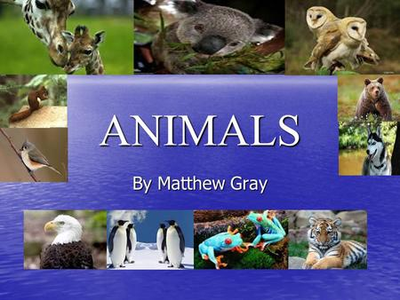 ANIMALS By Matthew Gray. Contents 1.Title Page 1.Title Page 2.Contents 2.Contents 3.Animal Groups 3.Animal Groups 4.Fish 4.Fish 5.Reptiles 5.Reptiles.