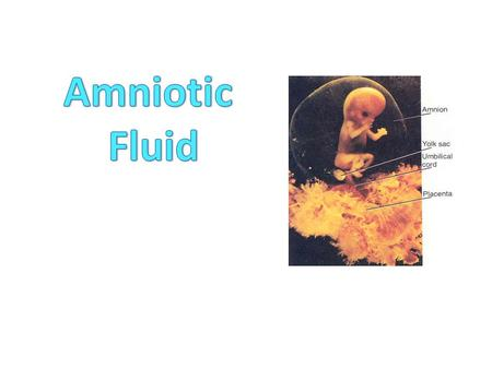 The Amnion & the Amniotic Fluid Amniotic Fluid The amniotic fluid is that fluid surrounding the developing fetus that is found within the amniotic sac.