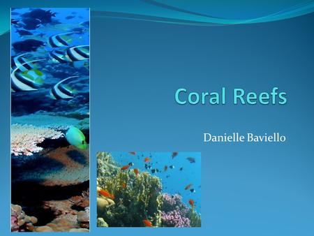 Danielle Baviello. What exactly are coral reefs? Coral reefs are rocky mounds and ridges formed in the sea by marine organisms through the accumulation.