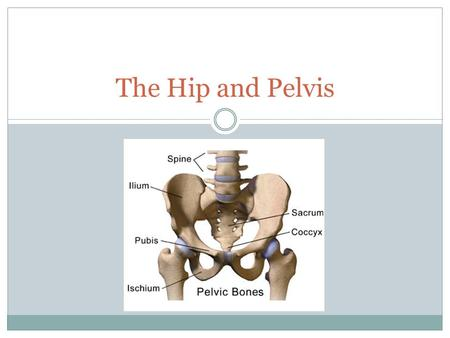 The Hip and Pelvis.
