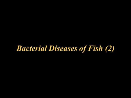 Bacterial Diseases of Fish (2). Pseudomonas fluorescens Causes pseudomonas septicemia mainly in general pond fish, seldom in salmonids normally a secondary.