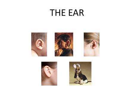 THE EAR. External Ear We have an ear on each side of our head. Noise is collected by the Outer Ear or pinna (the flaps which stick out from the sides.
