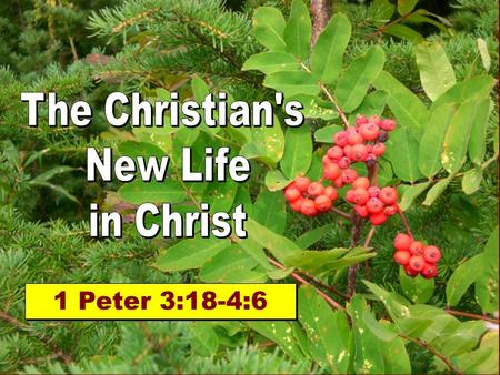 The Christian's New Life in Christ 1 Peter 3:18-4:6.