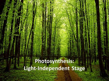 Photosynthesis: Light-Independent Stage