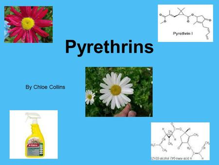 Pyrethrins By Chloe Collins. Background Information Pyrethrum is a mixture of several different compounds called pyrethrins and cinerins. Pyrethrum was.